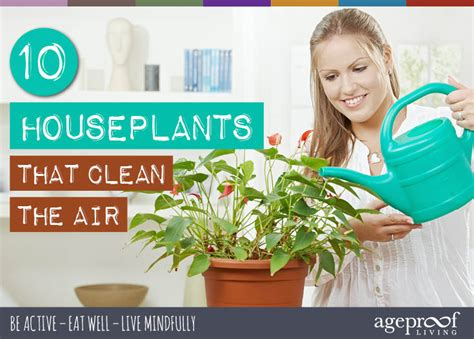 Interior Health Detox by 10 Best House Plants That Clean The Air