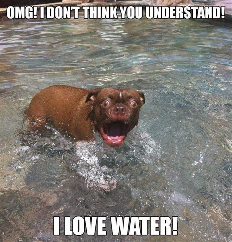 Water Meme - 31 amazing funny water pictures and images