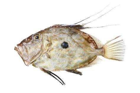 comment cuisiner le p穰isson 25 best ideas about poisson on