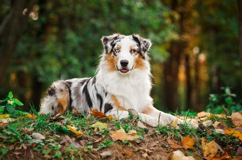 tips for aussies moving to uk travel whirlpool forums how to groom your dog s coat general hygiene dogs