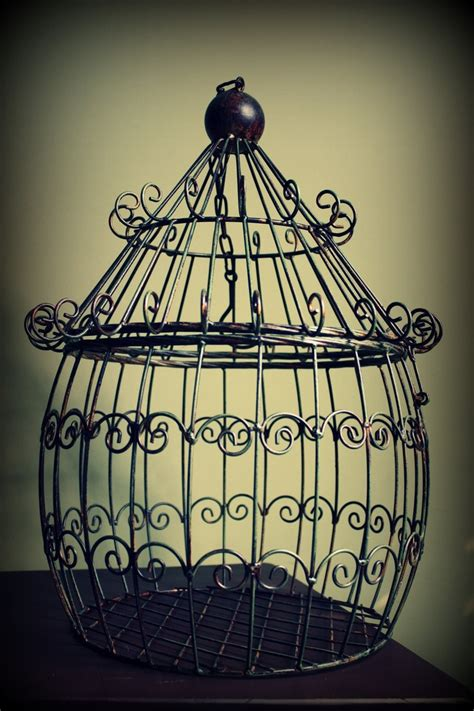 pin by carlson on bird cages pinterest