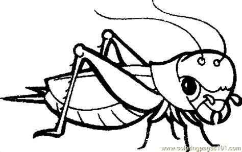 grasshopper coloring page free grasshopper coloring
