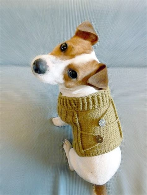 knitting pattern dog coat jack russell 21 dogs in handmade dog sweaters cute cuter cutest