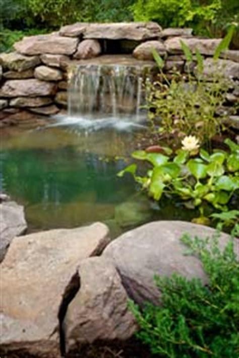 how to create a backyard wildlife habitat howstuffworks