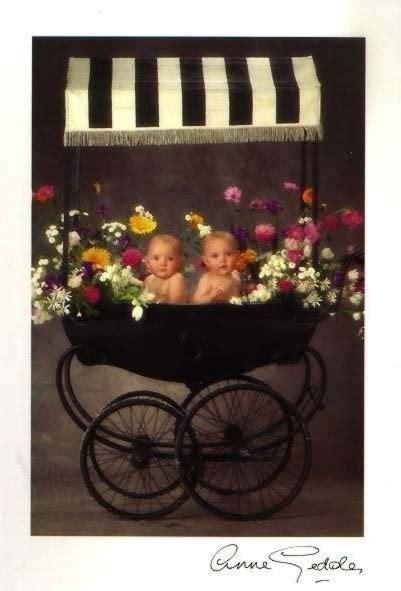 Set Delisa Flower 1000 images about geddes babies on