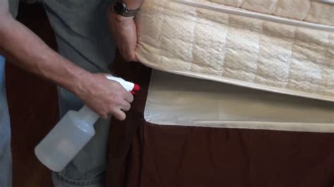 steps      prevent bed bugs bed bug treatment bed bug treatment