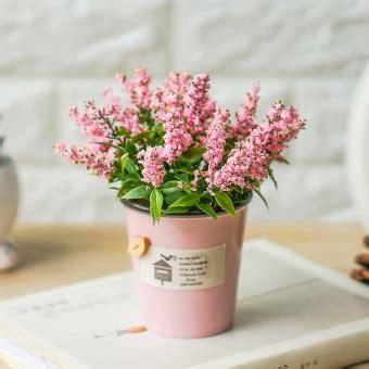 Vas Bunga Bunga Pot Kecil cari harga hiasan plastik bunga tanaman pot terkenal dan