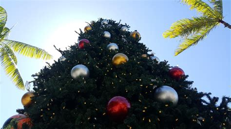 cairns events event details christmas tree light switch on