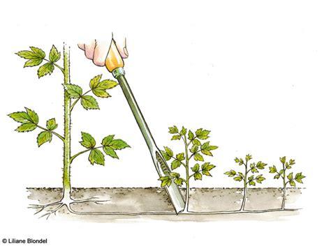 Charmant Faire Un Jardin D Hiver #7: Le-geste-du-mois-tailler-un-framboisier2.jpg