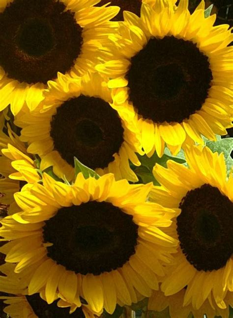 How To Make Sunflowers Out Of Paper - free activity make your own sunflower