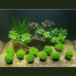 aquascape tank for sale aquatic plants for sale aquarium plants for sale