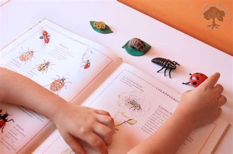 inventario ilustrado de insectos 8415250908 inventario ilustrado de los 193 rboles y los insectos libros montessori friendly creciendo