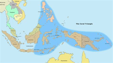The biodiversity in the coral triangle of Indonesia