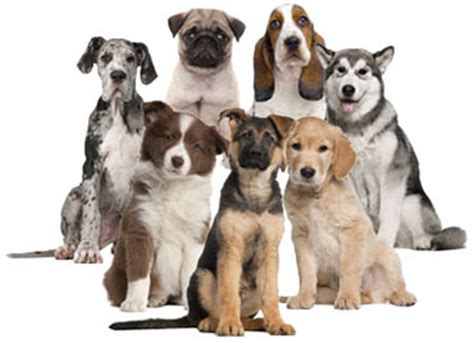 how to choose a breed tailster how to choose a breed that suits your needs