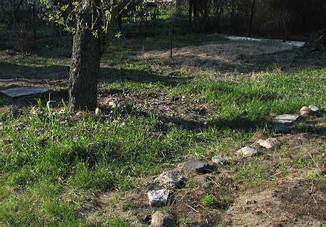 Schachtelhalm Bek Mpfen Garten 3244 by Quecken Im Rasen Bek 228 Mpfen Quecken Im Rasen Entfernen Das