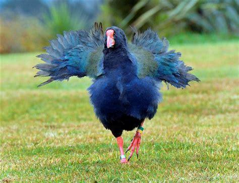 flightless birds quiz archives easy science for kids