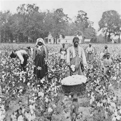 a black s journey from cotton picking to college professor lessons about race class and gender in america black studies and critical thinking books update 2 the purge a white or a glimpse