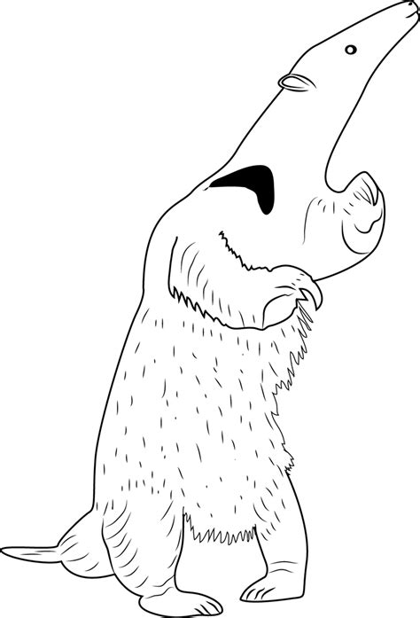 Anteater Coloring Page by Anteater Standing Coloring Page Free Anteater Coloring