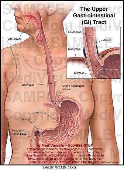 Upper Gi Tract Anatomy