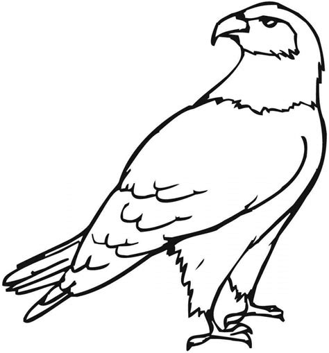 coloring page free printable eagle coloring pages for