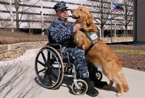 ptsd service dogs the of service in the treatment of combat related ptsd