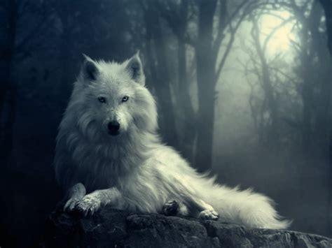 imagenes goticas de lobos fondos para escritorio de lobos fondos de pantalla