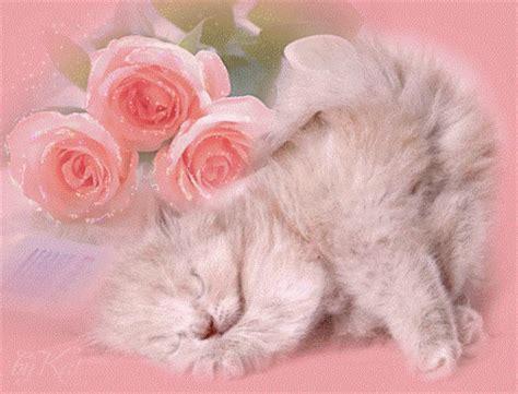 imagenes tiernas de amor con rosas im 225 genes tiernas de gatitos con rosas