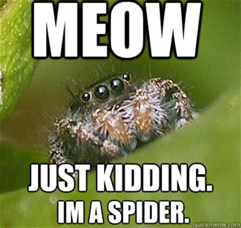Sad Spider Meme - meow just kidding im a spider misunderstood spider