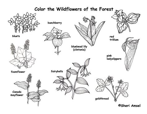coloring pictures of wildflowers forest wildflowers coloring page