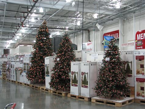 xmas trees at costco symbols sequim daily photo