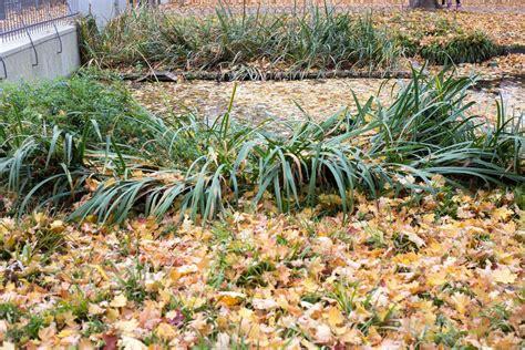 Herbstlaub Garten by Handlungsbedarf Im Garten Herbstlaub Auf Dem Rasen