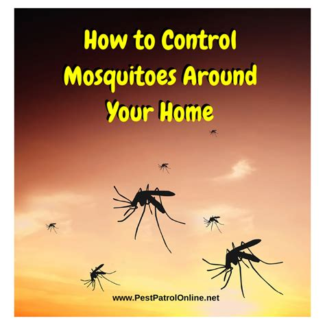 mosquitoes in backyard how to control how to control mosquitoes around home pest patrol