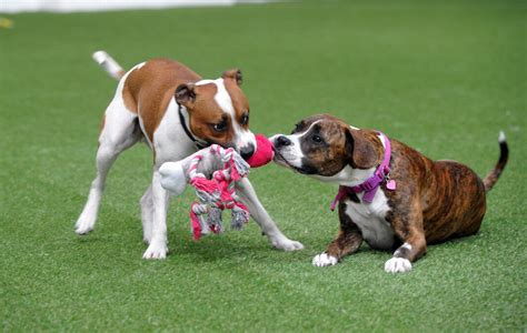 places to play with puppies about the petz parks petz