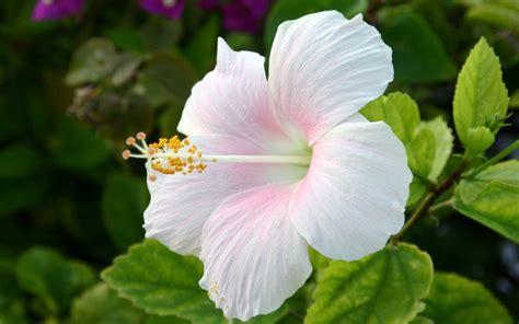 home flower flower homes beautiful white flowers