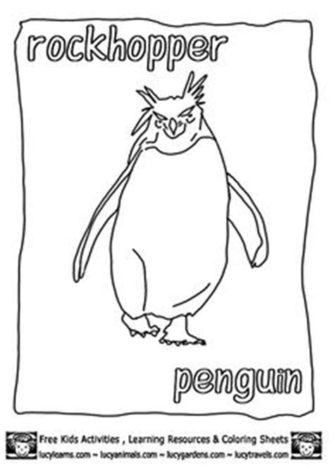 humboldt penguin coloring page a realistic drawing of humboldt penguin coloring page
