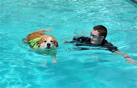best swimming dogs boarding and daycare swimming pack center