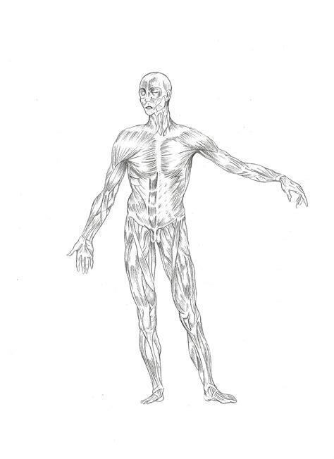 imagenes no realistas del cuerpo humano randomart crew dibujo realista m 250 sculos