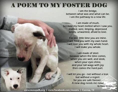 foster puppies quotes by william a foster like success