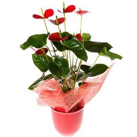 Pot Sepeda 6 By Sun Florist flower delivery rome florist rome