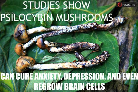Psychedelic Meme - studies show psilocybin mushrooms can cure anxiety