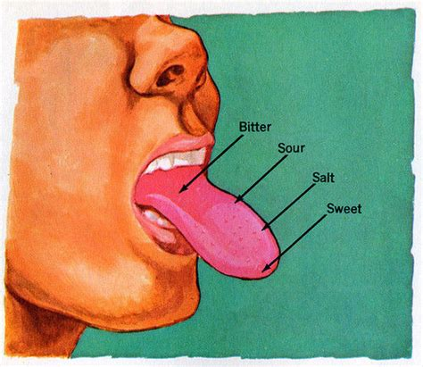 tongue taste sections the taste bud map you learned in school is wrong tastes