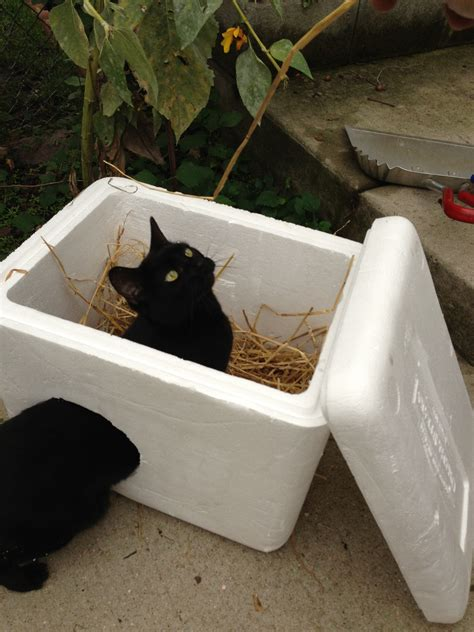 how to a feral feral cat winter shelter plans