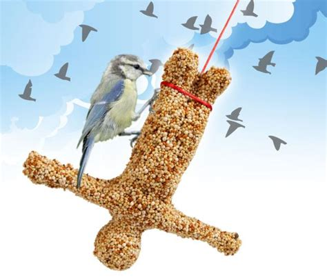 bungee bird feeder iwoot