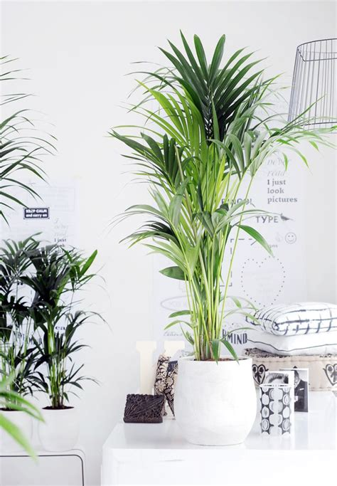 zimmerpflanzen schlafzimmer die richtige zimmerpflanze f 252 r das schlafzimmer house
