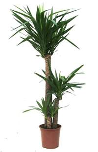 Home Plant Bamboo Lamp Photo Bamboo House Plant