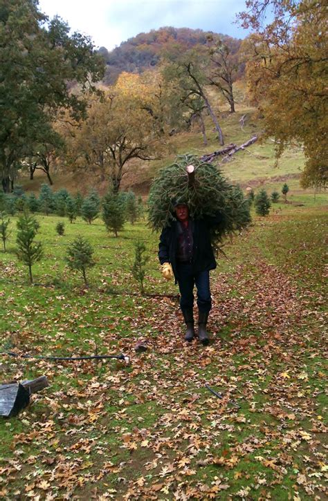 choose and cut trees in illinois choose and cut trees vermont tag choose and cut trees