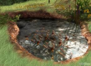 7 ideas for building a koi fish and backyard pond home
