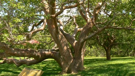 tree pictures metaphors of plants and trees metaphors in american politics