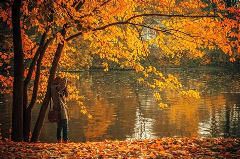fall autumn free photo autumn fall leaves colors water free