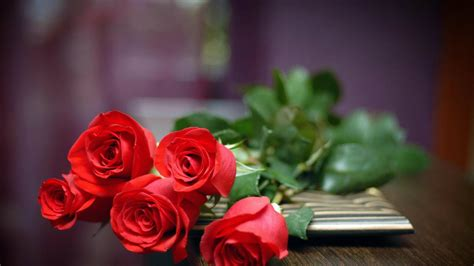 Red Roses HD Wallpapers Free Download For Desktop ? HD